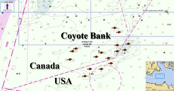 Coyote bank halibut fishing map for Washington state fishing license online